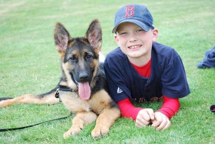 Обучение, дрессировка и воспитание собаки