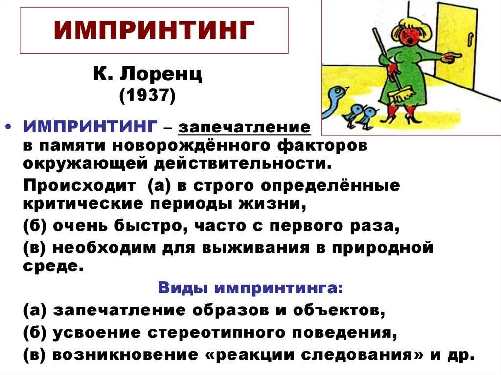 Sqlapp.ru. импринтинг у человека
