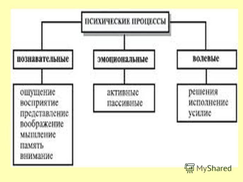 Память человека: свойства, способности, работа и процессы, улучшение, особенности, виды как называется, развитие