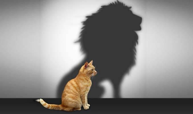 Что такое чувство собственного достоинства, самоуважение в психологии