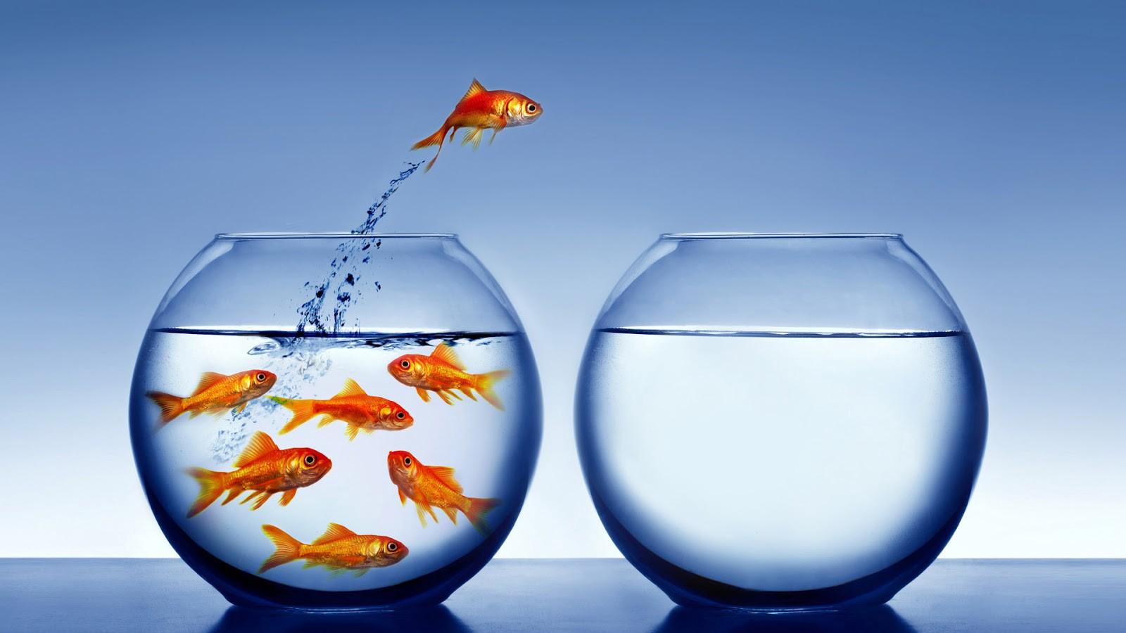 Рецензия: «психология достижений. как добиваться поставленных целей», хайди грант хэлворсон