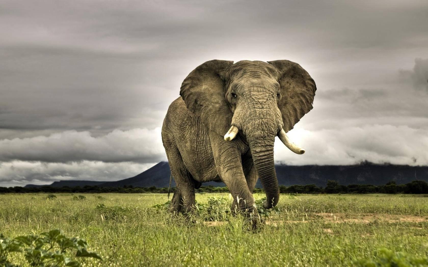 Как съесть слона по частям и подняться по спирали успеха