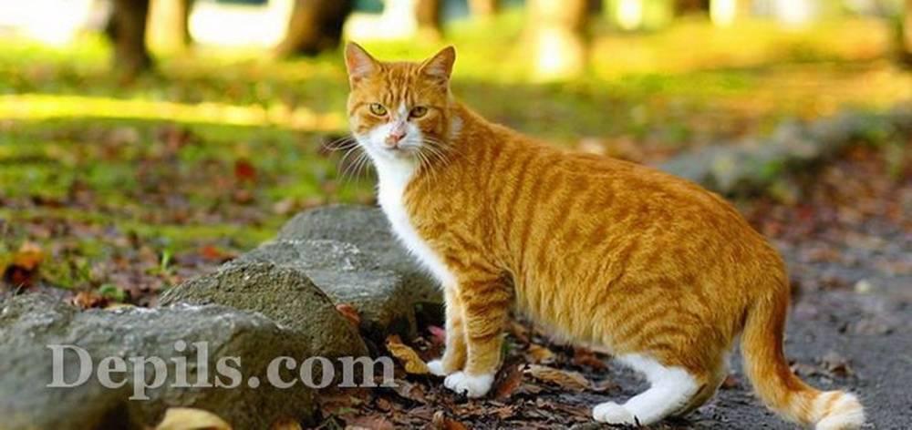 Читать книгу психология для детей: сказки кота киселя ларисы сурковой : онлайн чтение - страница 1