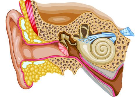 Писк в голове и ушах: причины и лечение