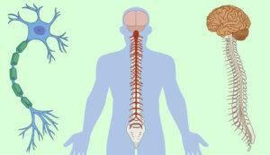 Болезни нервной системы человека, список заболеваний, симптомы нарушений и лечение