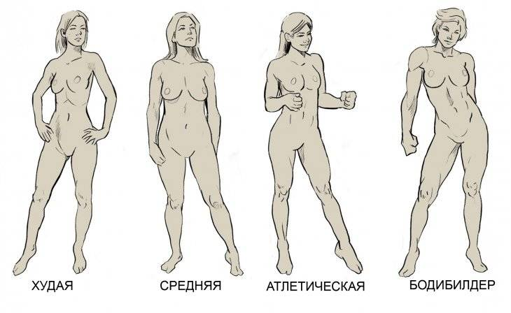 Взаимосвязь типа телосложения (астеник, пикник, атлетик) и психических свойств личности (шизотимик, циклотимик, искотимик)