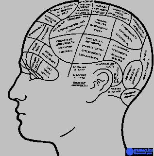 Читать книгу психофизиология. психологическая физиология с основами физиологической психологии. учебник е. и. николаевой : онлайн чтение - страница 35