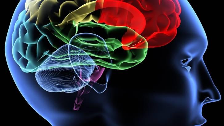 Типы высшей нервной деятельности — большая медицинская энциклопедия