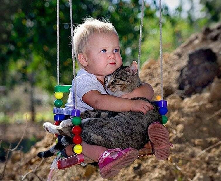 Что дает человеку общение с животными, правила общения, видео