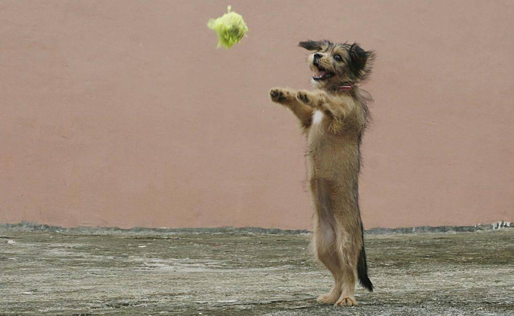 Методы дрессировки собаки. метод наказаний и метод поощрений | ветпрактика