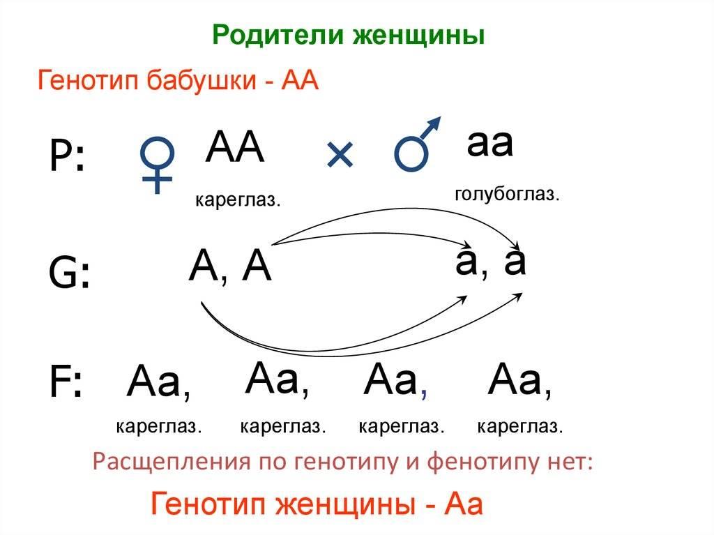 Фенотип — википедия переиздание // wiki 2