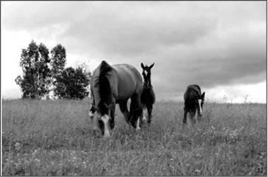Как общение с лошадью меняет человека?