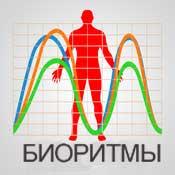 Биоритмы человека | биологические часы