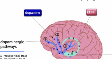 Читать книгу квантовая биомеханика тела. методика оздоровления опорно-двигательного аппарата человека. часть i наталии осьмининой : онлайн чтение - страница 1