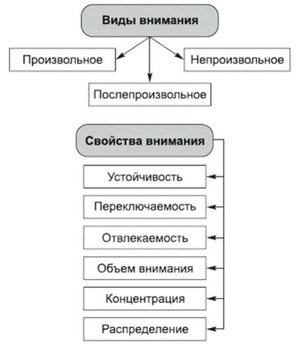 Функции и виды внимания