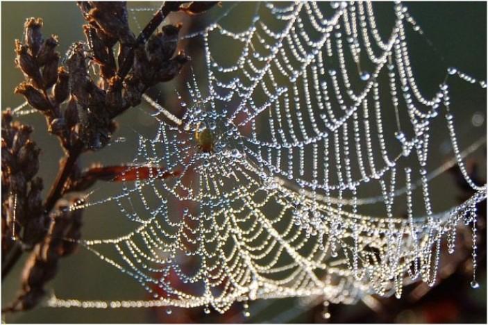 К чему снится большая паутина