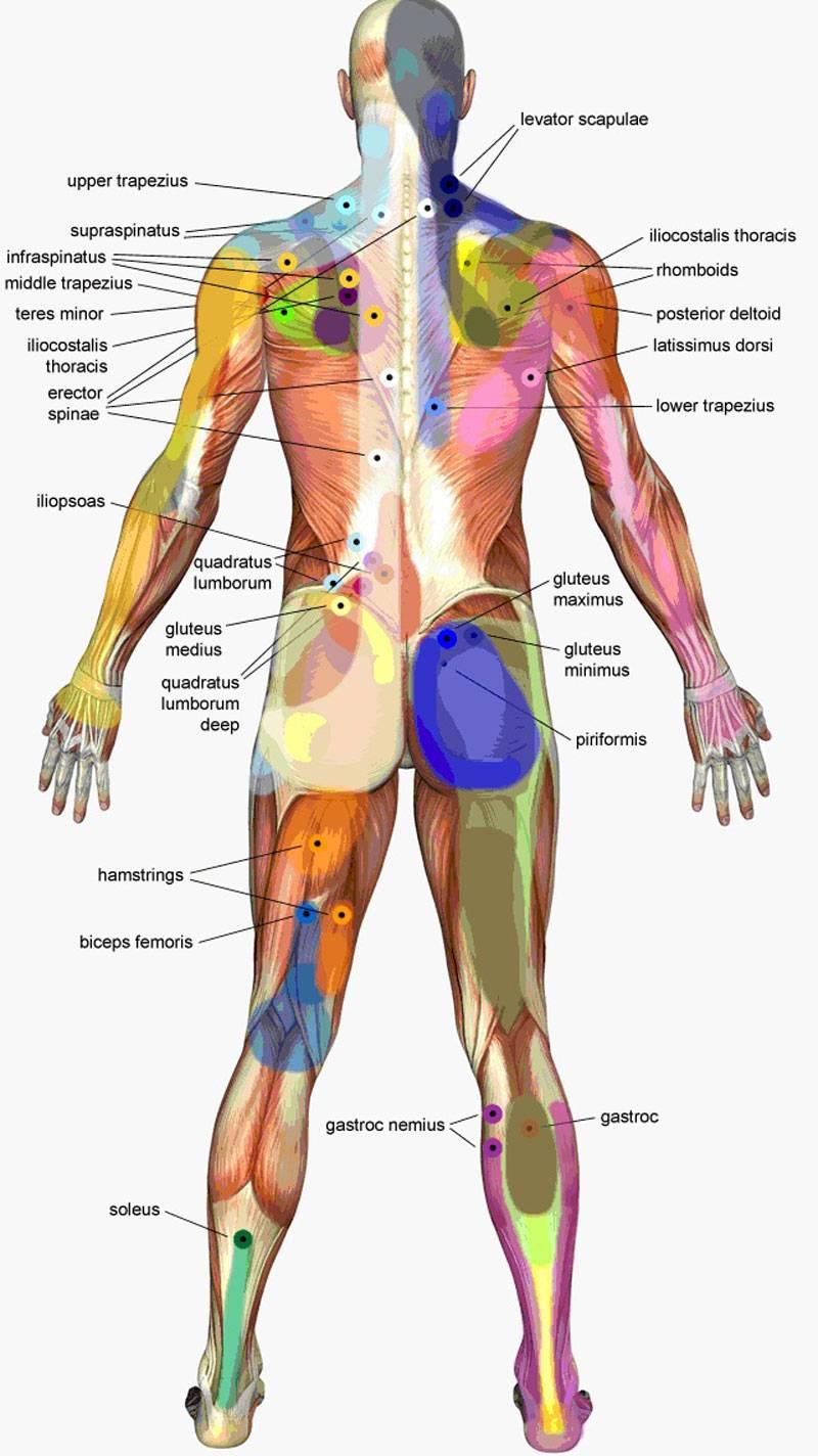 Телесно-ориентированная психотерапия: 7 видов телесного панциря. часть 2