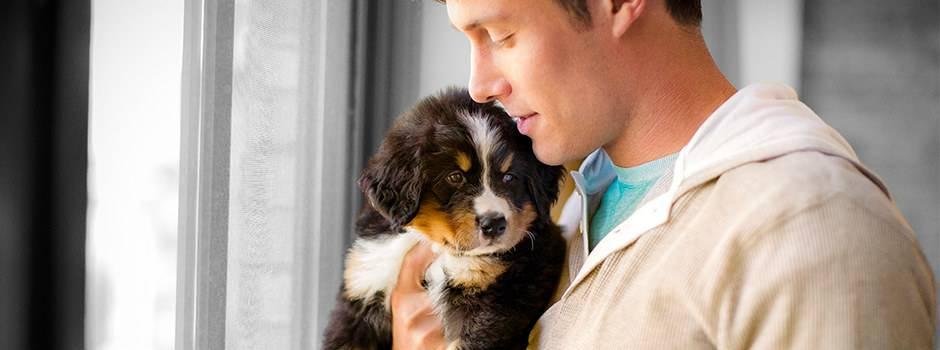Воспитание собаки, воспитание и дрессировка собаки, обучение собаки