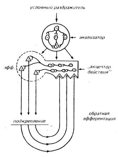 Читать книгу психофизиология. психологическая физиология с основами физиологической психологии. учебник е. и. николаевой : онлайн чтение - страница 1