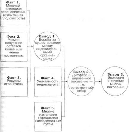Подкрепление (психология) — википедия