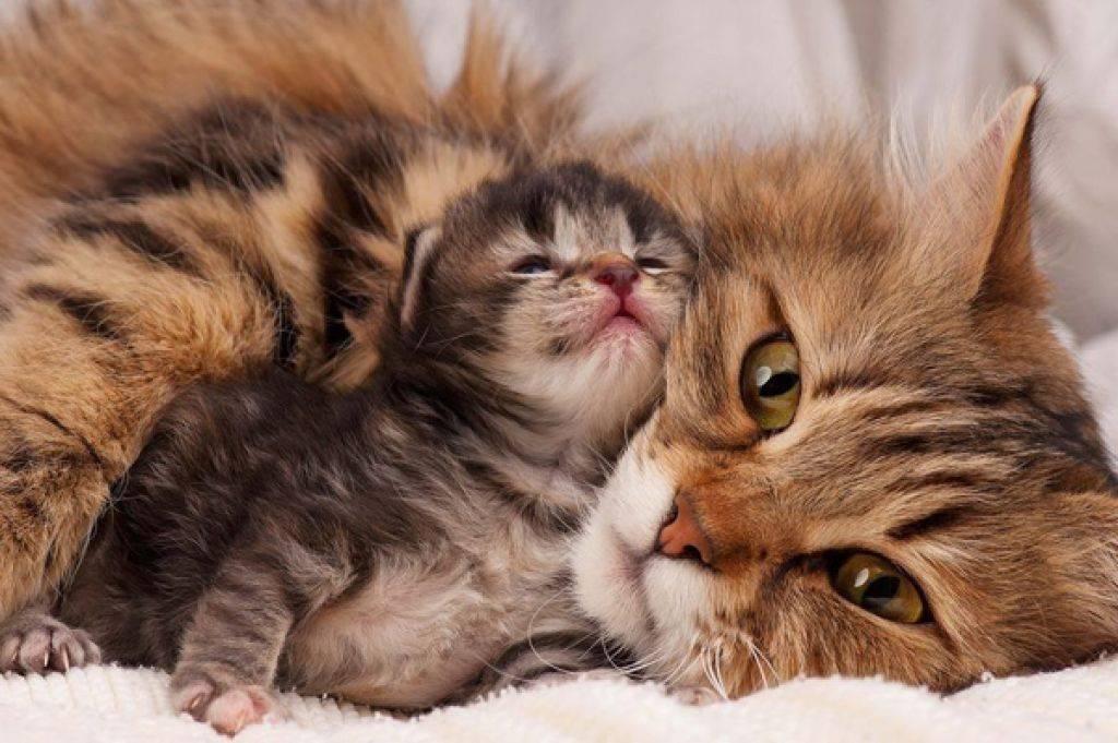 Материнский инстинкт - запись пользователя маринкат (summerapple) в сообществе психология в категории легко ли быть мамой?! - babyblog.ru