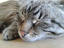 Сон как психофизиологический процесс