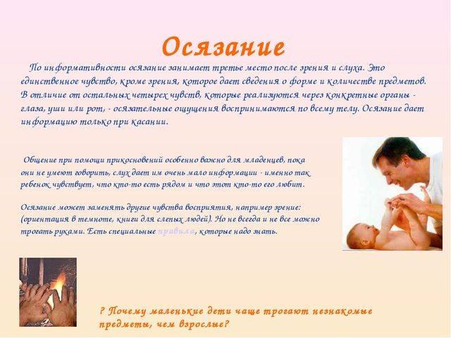 Анатомия органов чувств человека - информация: