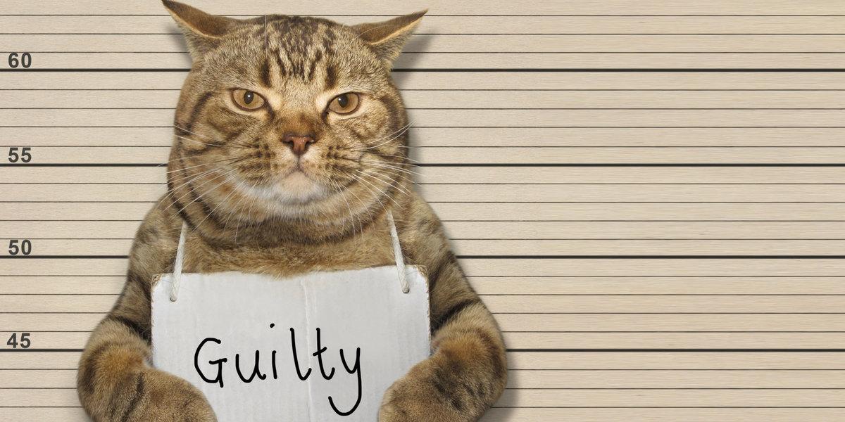 Психология: обвинение - бесплатные статьи по психологии в доме солнца