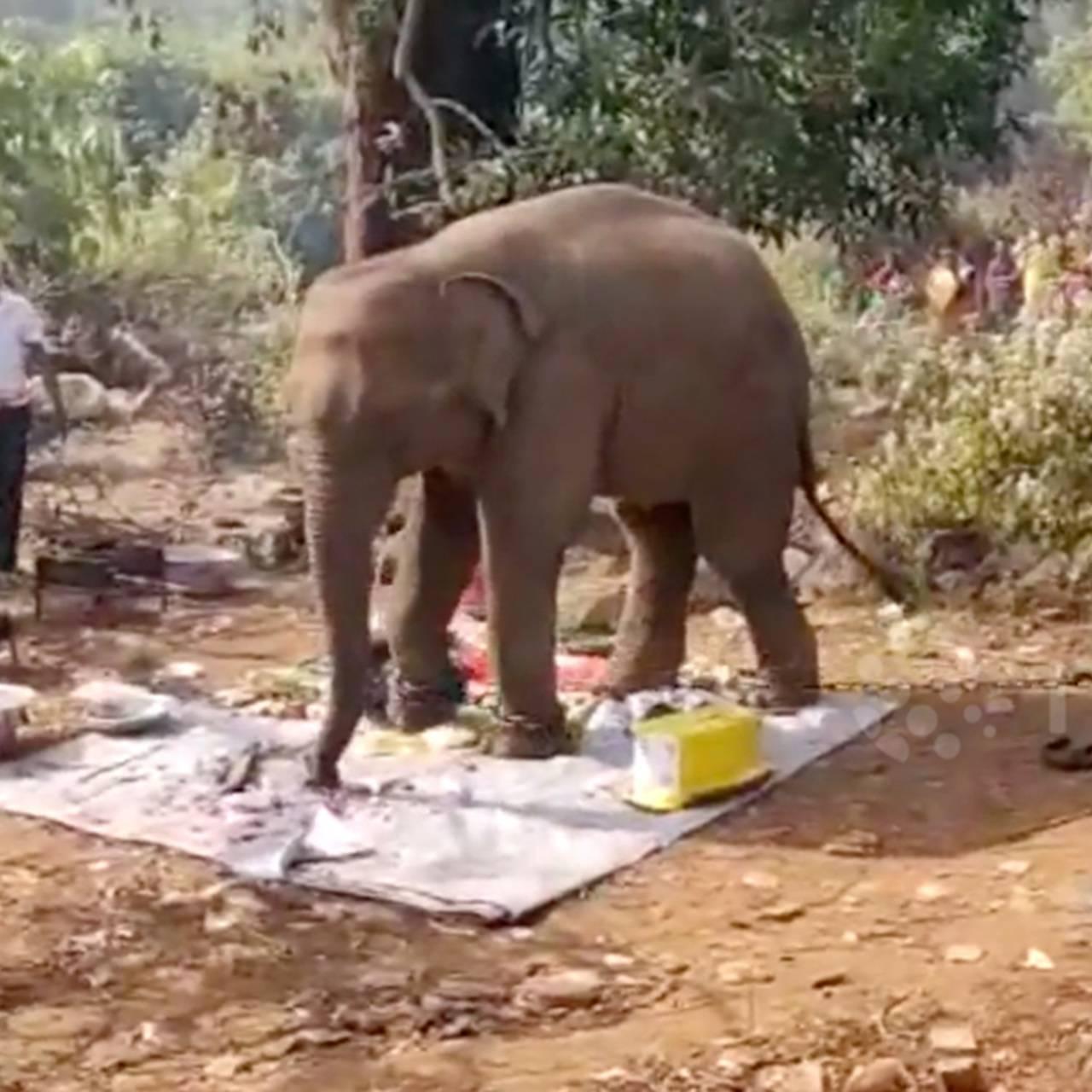 «слоны», «лягушки», «единороги». забавный тайм-менеджмент, который научит доводить начатое доконца