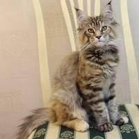 Рыжие кошки в доме — к счастью и деньгам!