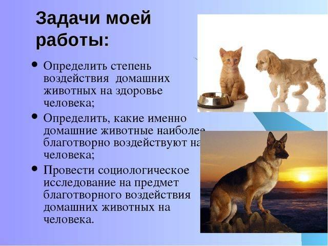 Зоопсихология и методы изучение психики животных