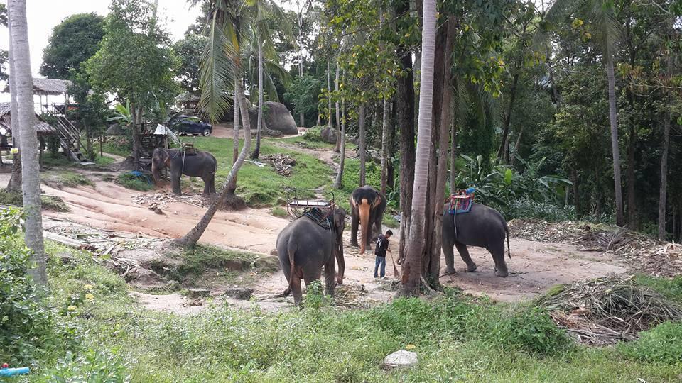 Как съесть слона: достижение целей вопреки всему