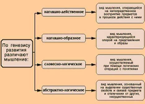 Виды мышления в психологии, их характеристика и примеры