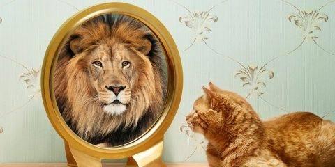 Психология: мания величия - бесплатные статьи по психологии в доме солнца