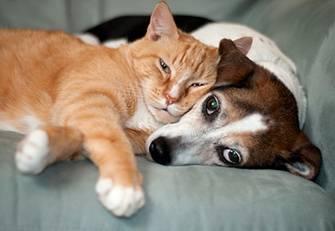 Как узнать, кого в семье больше любит кошка