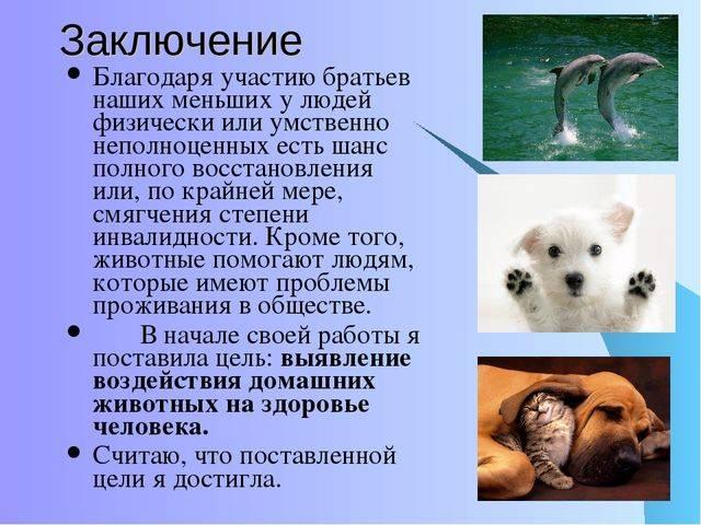 Животное или человек