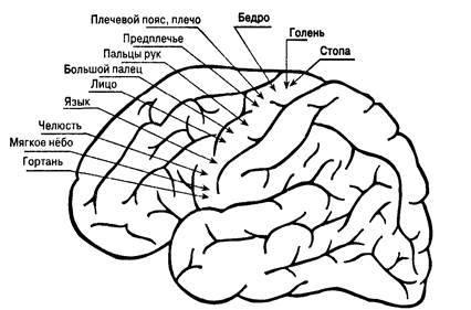 Воля – что это в психологии