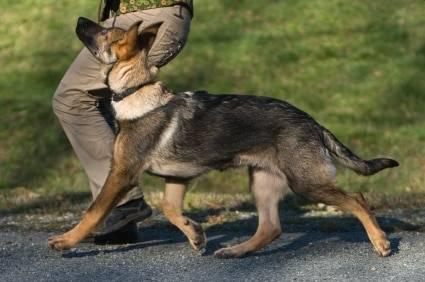 Воспитание собаки: выбираем линию поведения