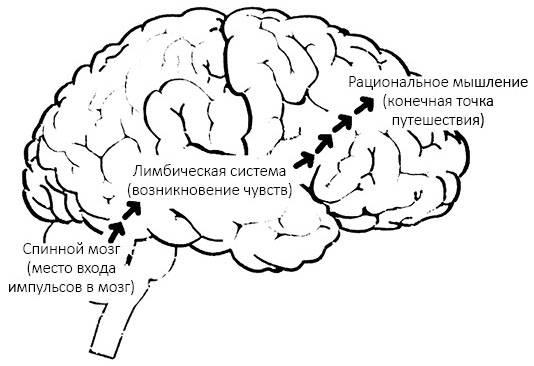 5 стратегий эмоционального регулирования