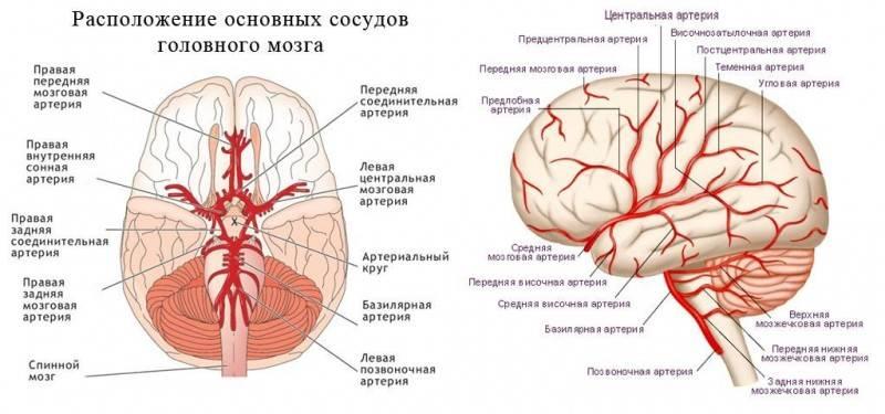 Как делают МРТ головного мозга и что показывает томограмма головного мозга