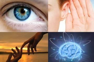 Биологические часы организма человека по часам работы
