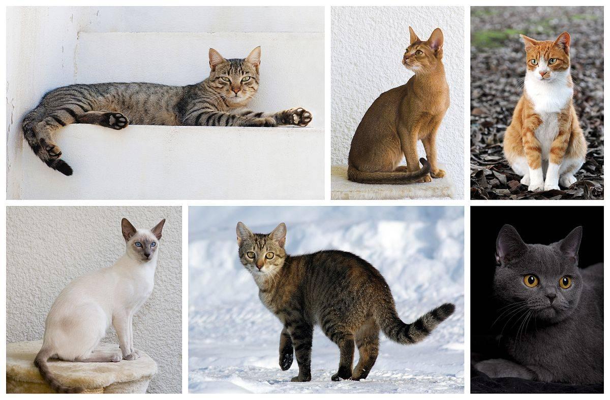 Факты о рыжих котах   мои домашние питомцы