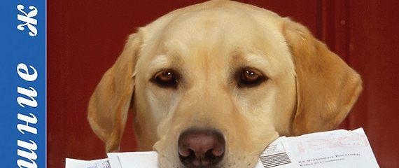 Методы дрессировки собак. их плюсы и минусы.