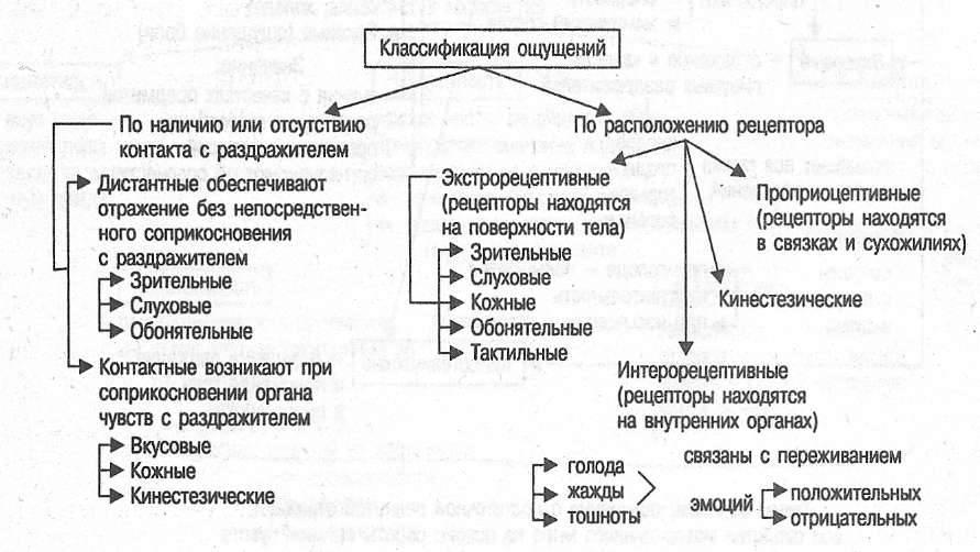 Ощущения в психологии: что это, виды, свойства, классификация, закономерности, пороги, слуховые, зрительные, интероцептивные, экстероцептивные, контактные