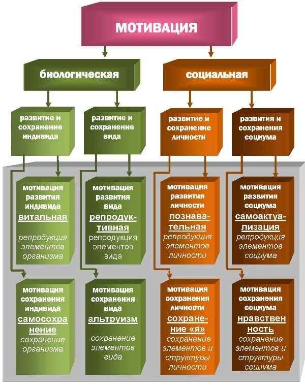 Про секту ашрам шамбалы из личного опыта. системный взгляд