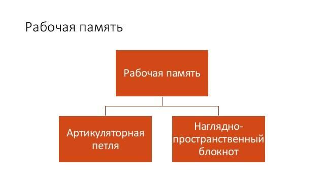 Что такое память. виды памяти. процессы памяти. качества памяти. представление.