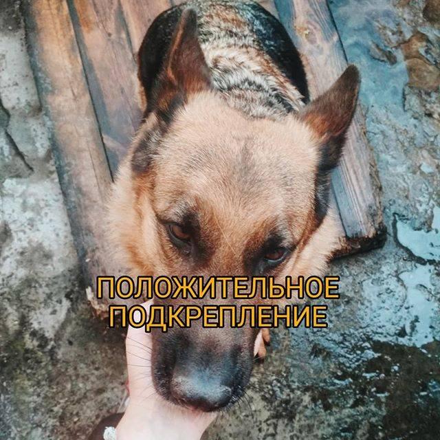 Джон фишер. о чем думает ваша собака