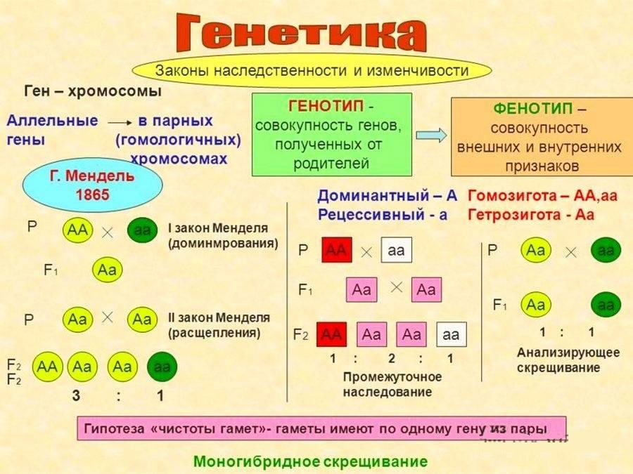 Фенотип – это описание индивидуальности человека.