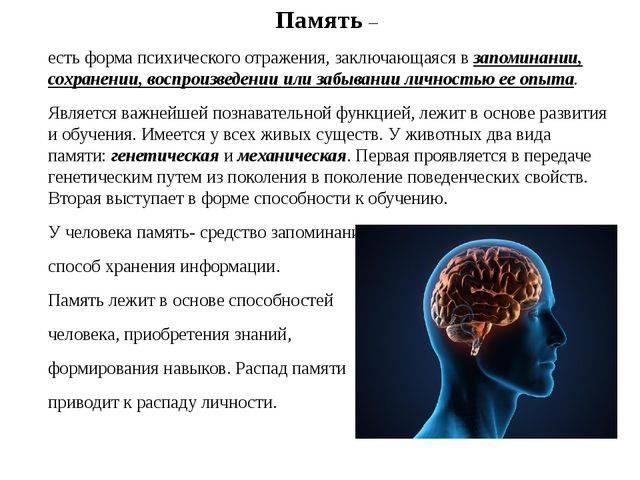 Виды памяти, их особенности — студопедия