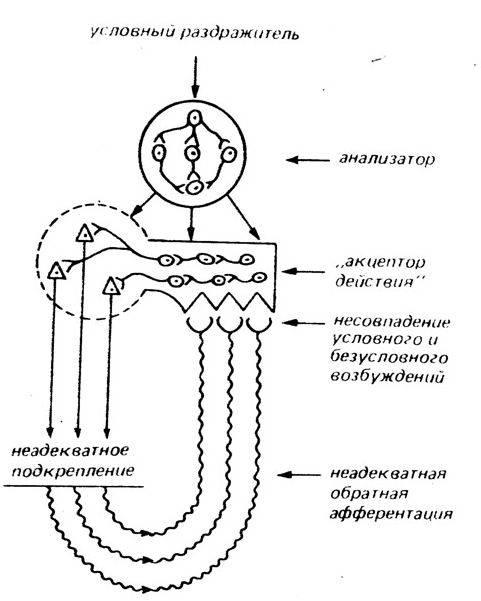 Эволюционная физиология - evolutionary physiology - qwe.wiki